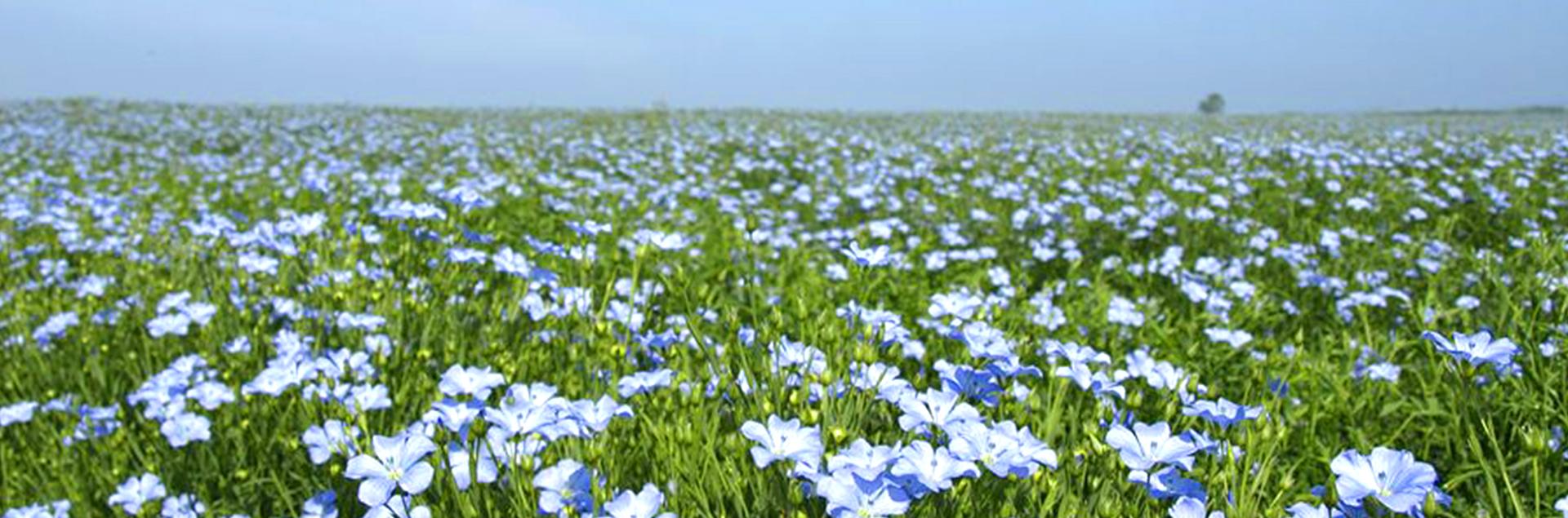 flax-farm0